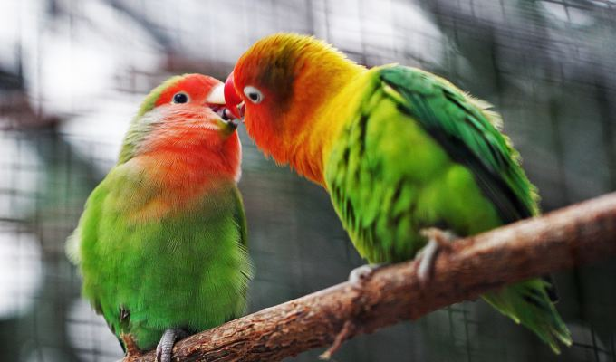 Perfectionism, Bird by Bird, Episode95